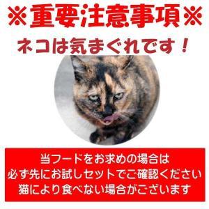 【お盆期間中も毎日発送】 国産 無添加 愛猫の健康を考えた キャットフード【 ねこのまんま 】 230g 高たんぱく 低脂肪 グルテンフリー ドライフード 全年齢対応 potitamaya-y 04