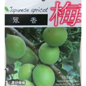 梅 ウメ うめ 翠香 すいこう スイコウ 6号 新品種 果樹 苗木 実梅 果樹苗 2年生接ぎ木苗