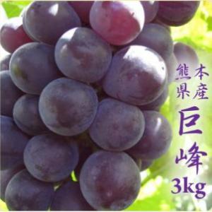 ぶどう 巨峰 3kg箱 糖度が高い熊本産種無しブドウ 朝摘み...