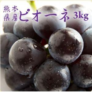 ぶどう ピオーネ 3kg箱 糖度が高い熊本産種無しブドウ 朝...
