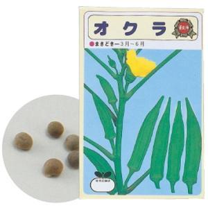 野菜の種 オクラ 苗床付|prettyw