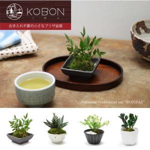 〜お手入れ不要の小さなプリザ盆栽〜 KOBON(こぼん)|prettyw