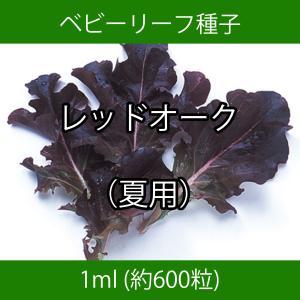 ベビーリーフ種子 B-03 レッドオーク(夏用) 1ml|printstudio-jp