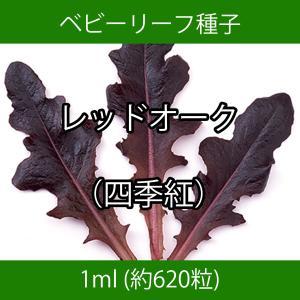 ベビーリーフ種子 B-04 レッドオーク(四季紅) 1ml|printstudio-jp