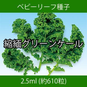 ベビーリーフ種子 B-08 縮緬グリーンケール 2.5ml|printstudio-jp