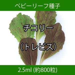 ベビーリーフ種子 B-12 チコリー(トレビス)|printstudio-jp