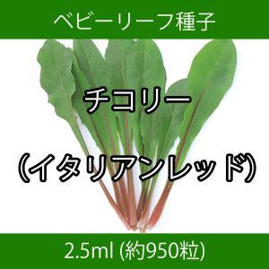 ベビーリーフ種子 B-13 チコリー(イタリアンレッド)|printstudio-jp