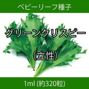 ベビーリーフ種子 B-16 グリーンクリスピー(立性) 1ml|printstudio-jp