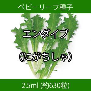 ベビーリーフ種子 B-17 エンダイブ(にがちしゃ) 2.5ml|printstudio-jp