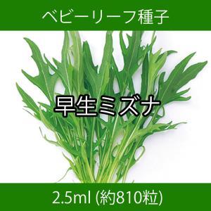 ベビーリーフ種子 B-18 早生ミズナ 2.5ml|printstudio-jp
