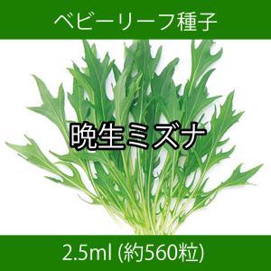 ベビーリーフ種子 B-19 晩生ミズナ 2.5ml|printstudio-jp