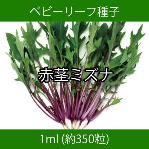 ベビーリーフ種子 B-20 赤茎ミズナ 1ml|printstudio-jp