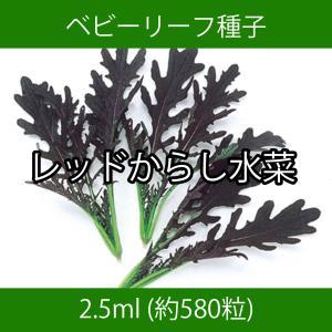 ベビーリーフ種子 B-22 レッドからし水菜 2.5ml|printstudio-jp