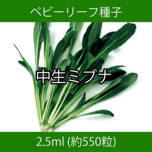 ベビーリーフ種子 B-23 中生ミブナ 2.5ml|printstudio-jp