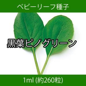 ベビーリーフ種子 B-25 黒葉ピノグリーン 1ml printstudio-jp