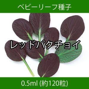 ベビーリーフ種子 B-28 レッドパクチョイ 0.5ml printstudio-jp