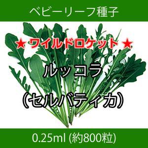 ベビーリーフ種子 B-30 ルッコラ(セルバティカ)0.25ml printstudio-jp