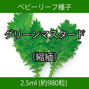 ベビーリーフ種子 B-32 グリーンマスタード(縮緬) 2.5ml printstudio-jp
