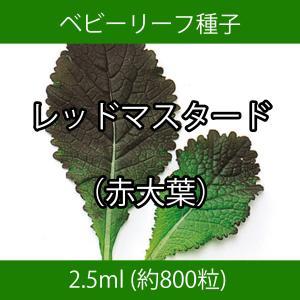 ベビーリーフ種子 B-33 レッドマスタード(赤大葉) 2.5ml printstudio-jp
