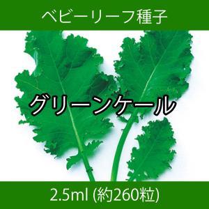 ベビーリーフ種子 B-34 グリーンケール 2.5ml printstudio-jp