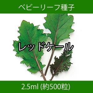 ベビーリーフ種子 B-35 レッドケール 2.5ml printstudio-jp