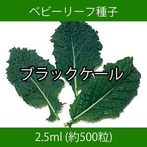 ベビーリーフ種子 B-36 ブラックケール 2.5ml printstudio-jp