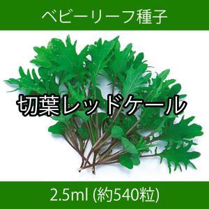 ベビーリーフ種子 B-37 切葉レッドケール 2.5ml printstudio-jp