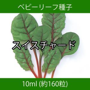 ベビーリーフ種子 B-43 スイスチャード 10ml printstudio-jp