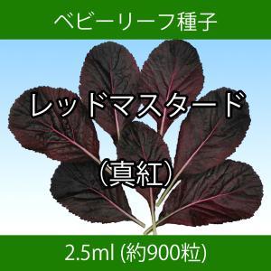 ベビーリーフ種子 B-48 レッドマスタード(真紅) 2.5ml printstudio-jp