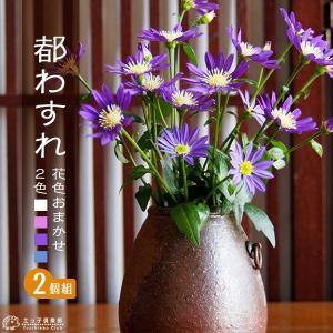 ミヤコワスレ 9cmポット苗 2色セット|produce87