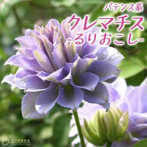 クレマチス 『 るりおこし 』 パテンス系( 早咲き大輪系 ) 9cmポット苗|produce87