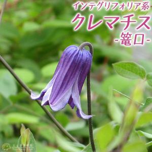 クレマチス 『 篭口 ( ロウグチ ) 』 インテグリフォリア系 9cmポット苗|produce87