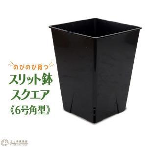 のびのび育つ 『 スリット鉢 スクエア 』 6号角型|produce87
