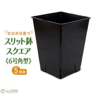 のびのび育つ 『 スリット鉢 スクエア 』 6号角型【5個セット】|produce87