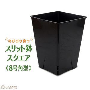のびのび育つ 『 スリット鉢 スクエア 』 8号角型|produce87