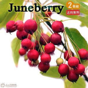 ジューンベリー (西洋ザイフリボク) 2個セット 送料無料 10.5cmポット苗|produce87