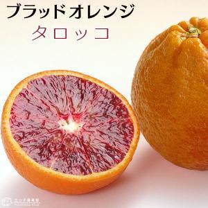 珍種ブラッドオレンジ 『 タロッコ 』 接ぎ木 13.5cmポット苗