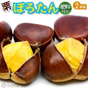 栗 『 ぽろたん 』セット (2品種組) 肥料付き!!|produce87