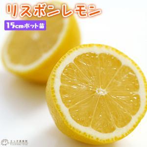 リスボンレモン 接ぎ木15cmポット苗|produce87