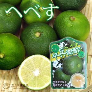 平兵衛酢 ( ヘベス ) 15cmポット 接ぎ木苗|produce87