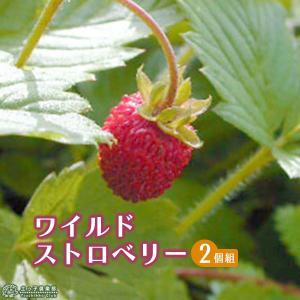 ワイルドストロベリー 9cmポット苗 2個組|produce87