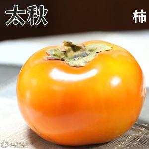 柿(甘)『太秋(タイシュウ)』 12cmポット苗