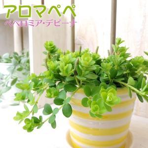「ペペロミア/デピーナ」は半日陰で育つ多肉質の観葉植物で、キッチンのシンク横でも元気に生育します。 ...