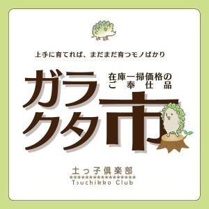 【訳あり・在庫処分】クラブアップル レモイネ【2ポットセット...