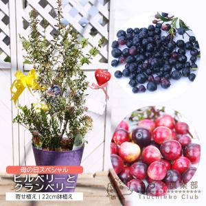 (母の日寄せ植え) ビルベリーとクランベリーの寄せ植え ( アートストーン22cm鉢植え ) produce87