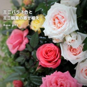ミニバラ3色とミニ観葉の寄せ植え(アートストーン22cm鉢植...
