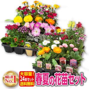 春夏の花苗 24個セット 送料無料