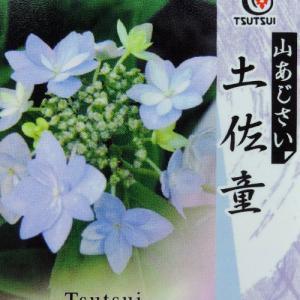 ヤマアジサイ 『 土佐童 』 9cmポット苗|produce87