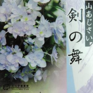 ヤマアジサイ 『 剣の舞 』 9cmポット苗|produce87