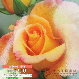 四季咲き中輪 『 モナリザ 』 2年生接 ぎ木苗 (フロリバンダローズ) 強香|produce87